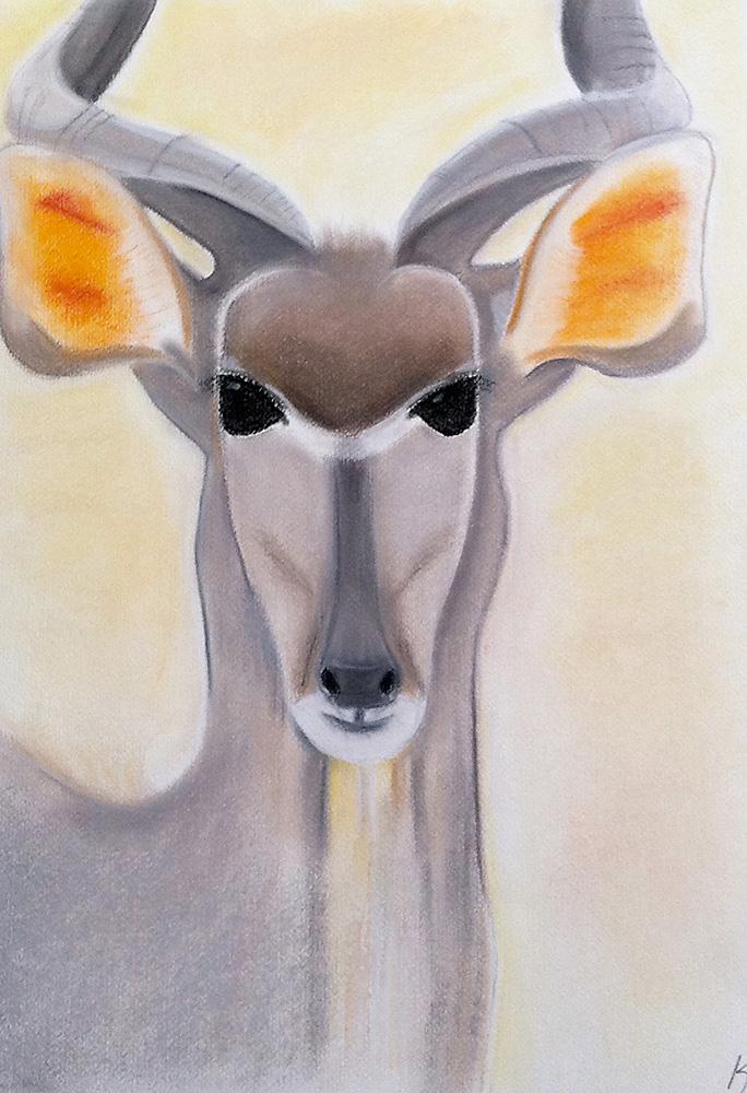 Gazelle I